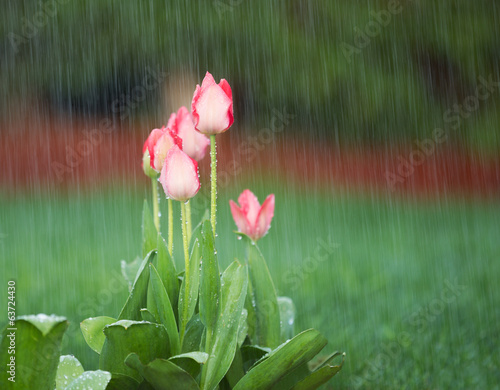 Blooming Flowers in Springtime Rain
