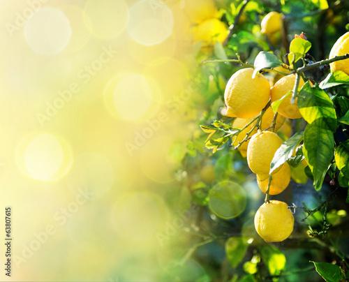 Obraz na plátne lemon background