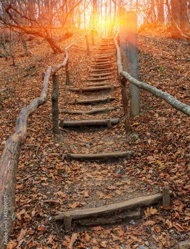 drewniane gwiazdy w lesie jesienią
