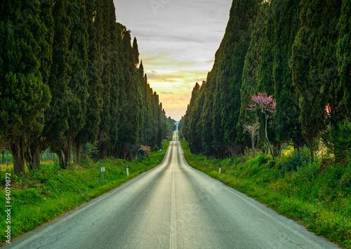 Bolgheri famous cypresses tree straight boulevard on sunset. Mar Poster Mural XXL