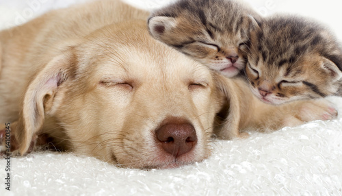 puppy and kittens sleeping together #64100845