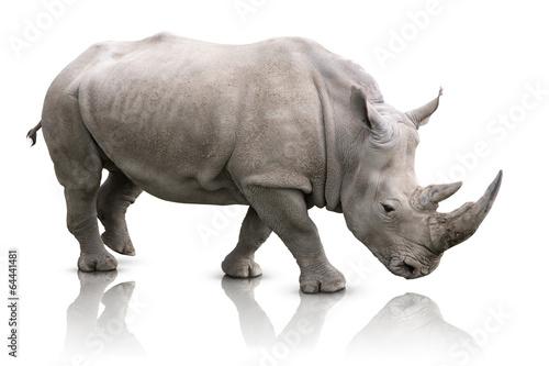Canvas Print Rhino isolated