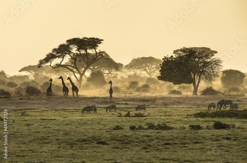 Fotografie, Obraz Silueta di žirafa