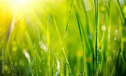 Fototapeta premium Świeża zielona trawa z rosa kropel zbliżeniem. Miękkie ogniskowanie