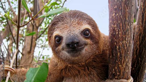 Photo Baby sloth