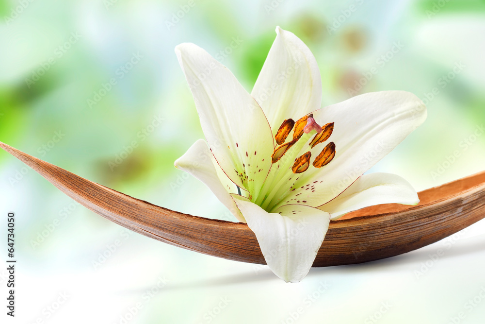 Beautiful white lily flower on a coco palm leaf - obrazy, fototapety, plakaty