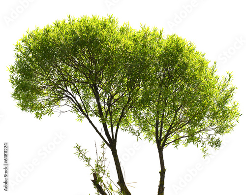 Fényképezés Green Tree Isolated on White Background