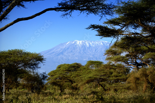 Fototapeta premium Kilimandżaro w Amboseli