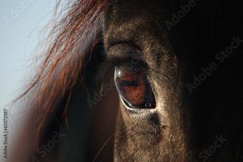 Close up of brown horse eye #65072087