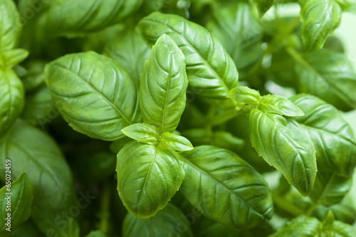 Photographie fresh basil leaves herb background