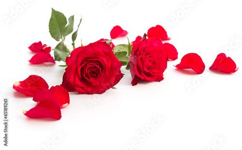 Zwei Rosenblüten und Blütenblätter #65189261