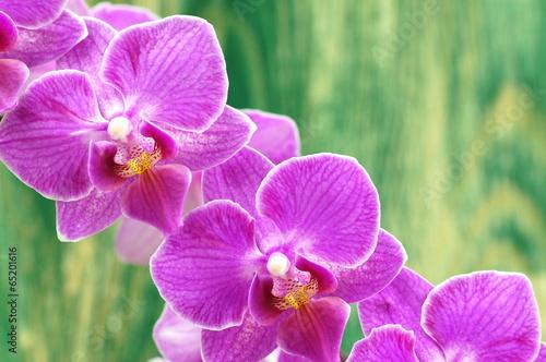 Fototapeta premium przepiękne orchidee na drewnianym tle