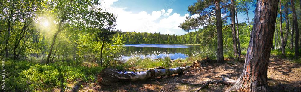Leśna panorama nad brzegiem jeziora