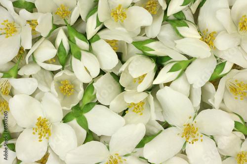 Wallpaper Mural White jasmine flowers abstract background