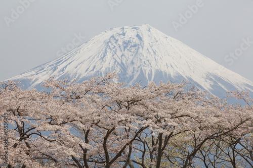 Naklejka premium góra fuji i sakura