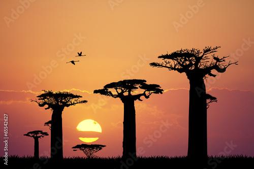 Carta da parati baobab silhouette at sunset