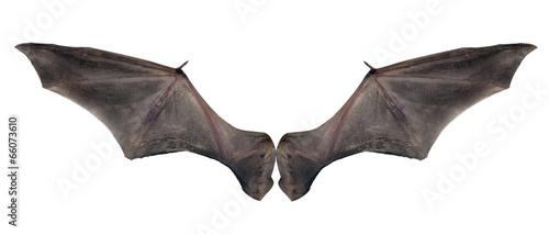 Billede på lærred bat wings