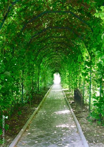 a garden tunnel Poster Mural XXL