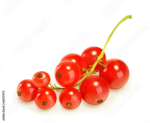 Photo Redcurrant berries, vector illustration