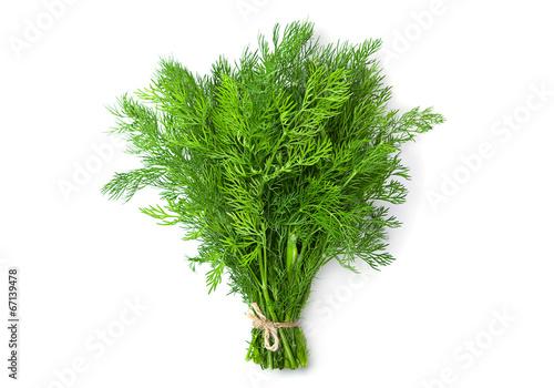 Dill herb Fototapeta