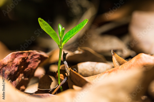 Obraz na plátne Green sprout