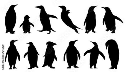 Stampa su Tela penguin silhouettes