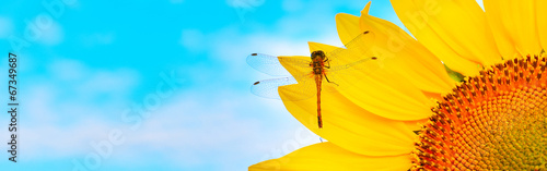 Dragonfly on sunflower