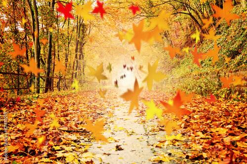 Herbstlicht auf buntem Waldweg – Version 1