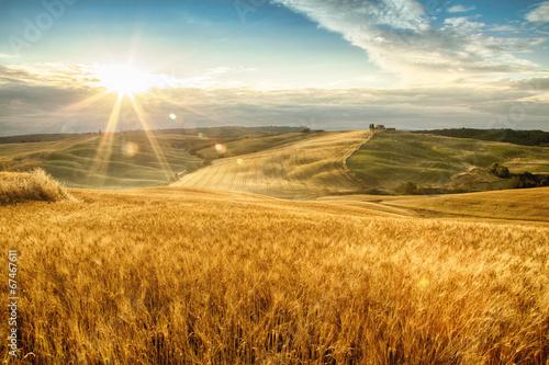 Fotografie, Tablou fields of gold