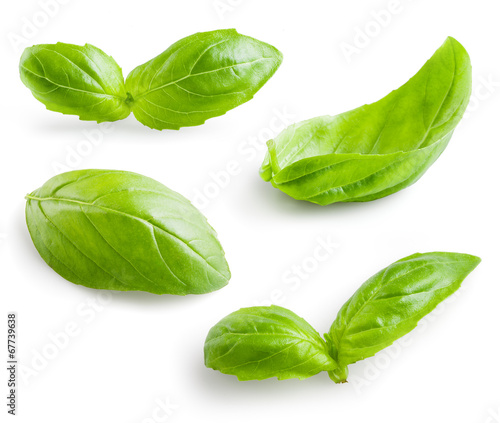 Tableau sur Toile Fresh basil isolated on white background