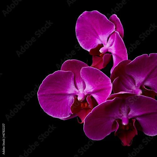 Canvas Print Purple orchid flowers