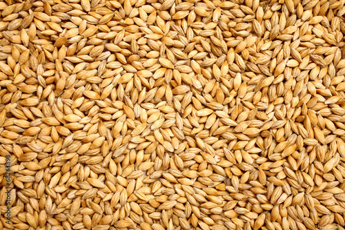 Wheat background view from the top close up Fotobehang
