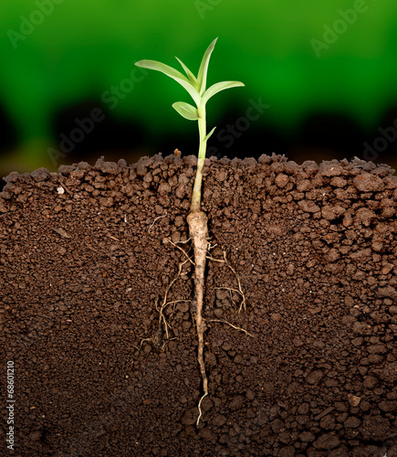 Photo Growing plant with underground root visible