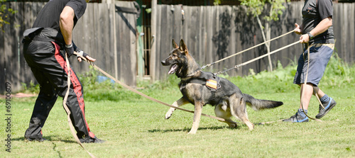 Fotografia police dog