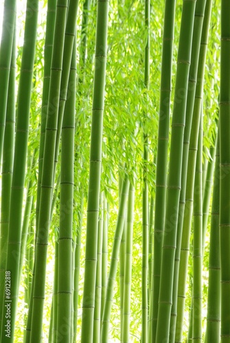 Fototapeta premium Zielony bambusowy las