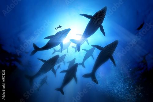 Canvas Print Humpback Whale Migration