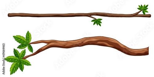 Murais de parede Branches