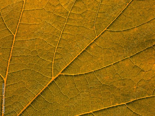 orange leaf texture