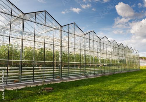 Fotografiet greenhouse vegetable production