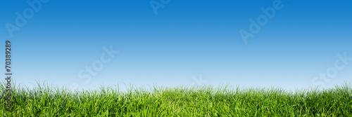Fototapeta Green grass on blue clear sky, spring nature theme. Panorama