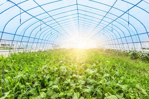 Canvastavla greenhouse