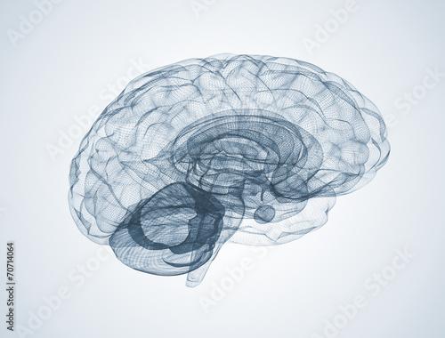 Menschliches Gehirn 3d Fototapete