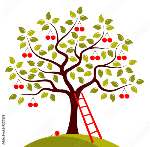 Obraz na plátne cherry tree