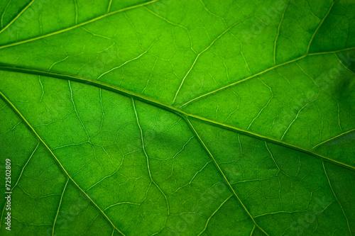 Green leaf #72502809