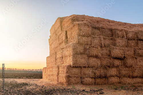 Wallpaper Mural autumn or summer landscape with haystack after the harvest of wh