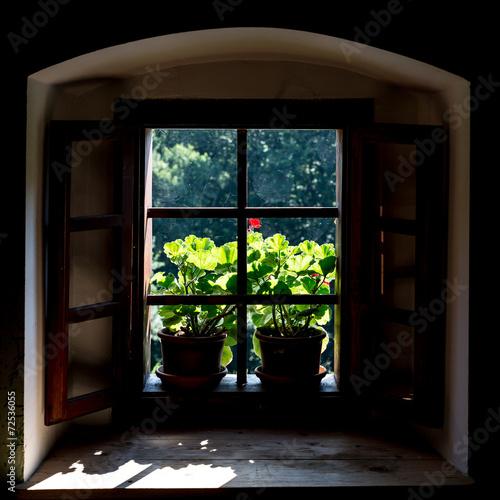 Fototapeta Okno z kwiatami i sieciami pająka na ścianę