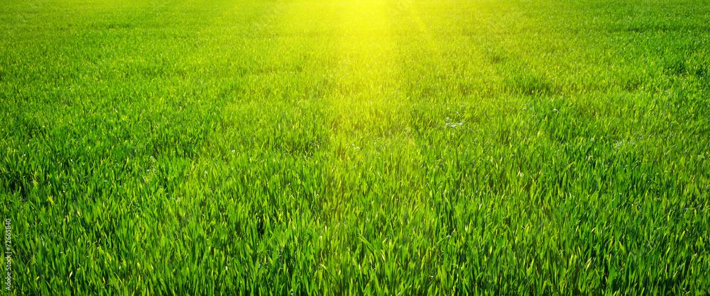 Zielony trawnik na tle <span>plik: #72665840 | autor: ZaZa studio</span>
