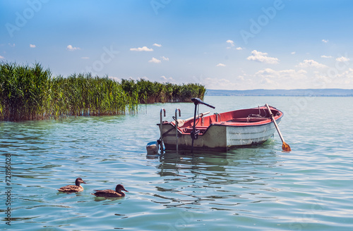 Fotografie, Obraz A boat and wild ducks floatinf in the waters of lake Balaton
