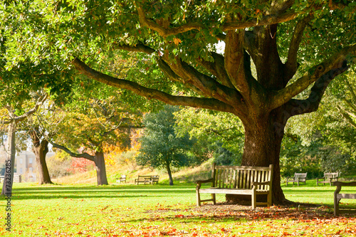 Kew Gardens park Fototapeta