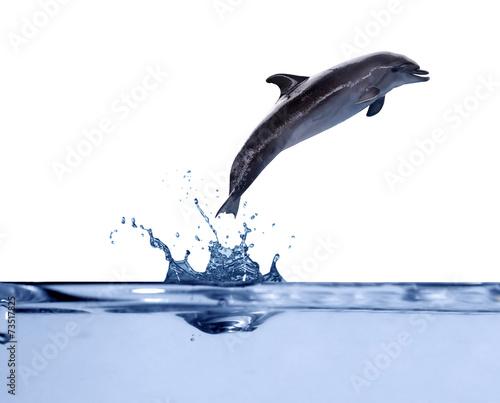 Fotografiet dark grey doplhin above water in jump